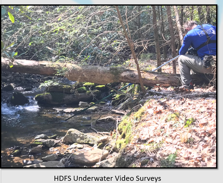 HDFS BrookTrout